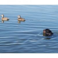 Flora & ducks