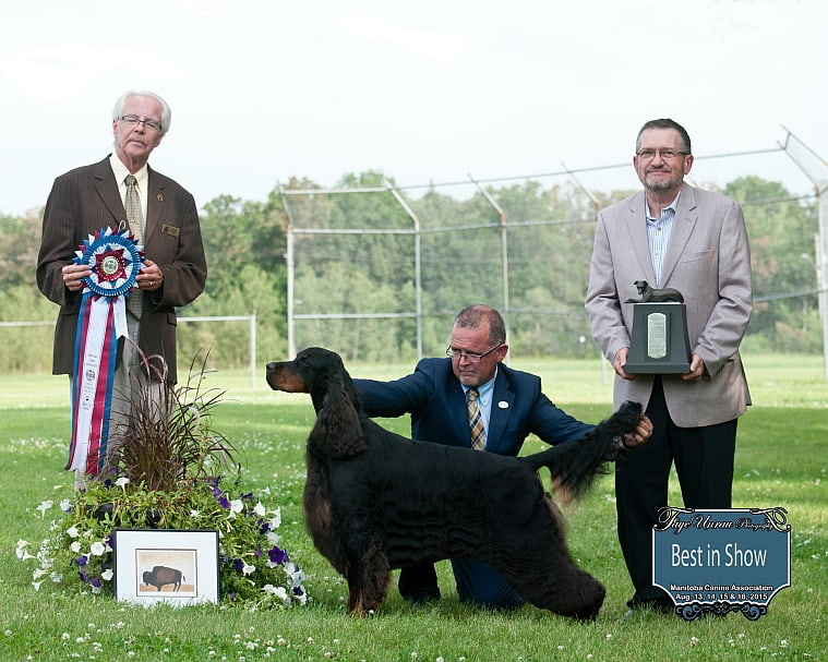 "Best in Show (All Breed)-Ch Bran Linn Braxfield Xpert Advice – ""Sally"""