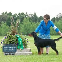"Best In Puppy Sweepstakes: Xenaran Journey to Sassenach – ""Raili"""