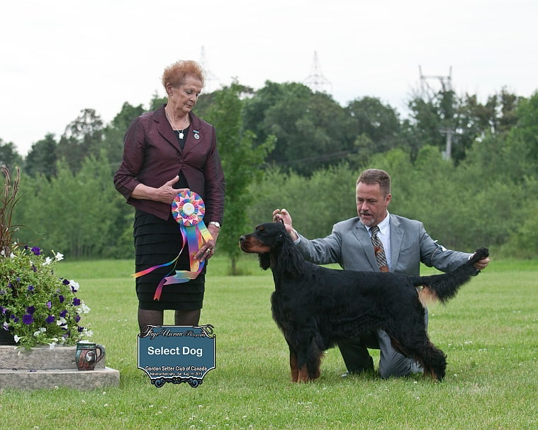 "Select Dog: Ch Triseter Celtic Player SH – ""Player"""