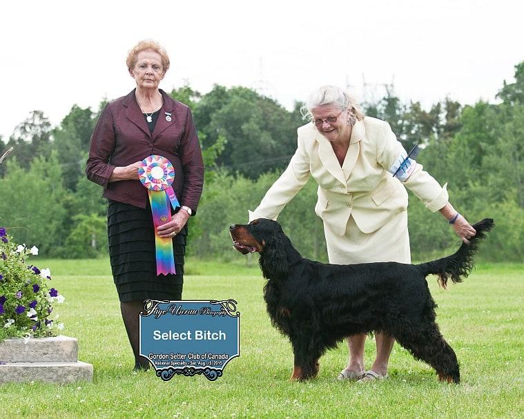 "Select Bitch: Ch Sassenach Knight's Caisteal - ""Islay"""