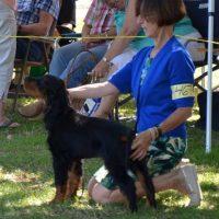 Baby Puppy Harbingers Forest Ranger